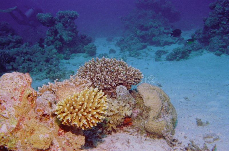 Durée sous-marine du récif coralien image stock