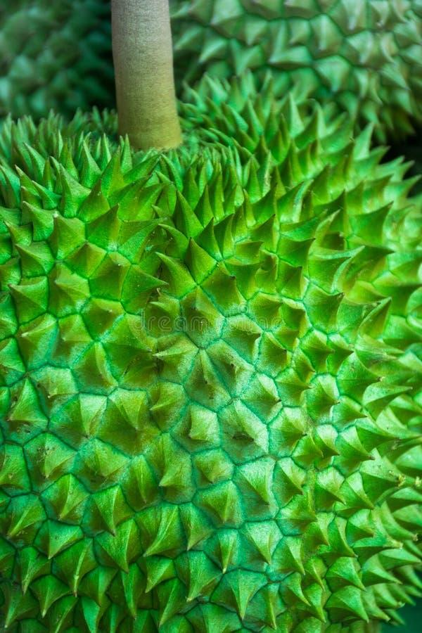 Durain, der König der Frucht in Thailand Durain im Markt lizenzfreie stockfotografie