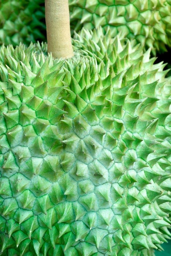 Durain, der König der Frucht in Thailand Durain im Markt stockfoto