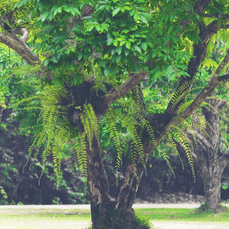 Durata della foresta pluviale tropicale immagini stock libere da diritti
