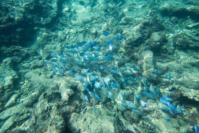 Durata subacquea del mar dei Caraibi fotografia stock
