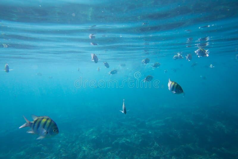 Durata subacquea del mar dei Caraibi fotografie stock libere da diritti