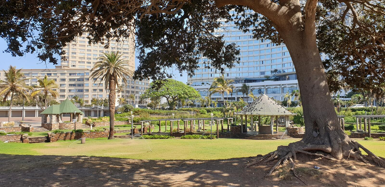 Durban Beachfront Gardens. Hotels, beautiful, green, spring, birds, trees, grass, antique, opd, old, palms, pretty, aesthetic, roots, shade, sunny, morning stock photo