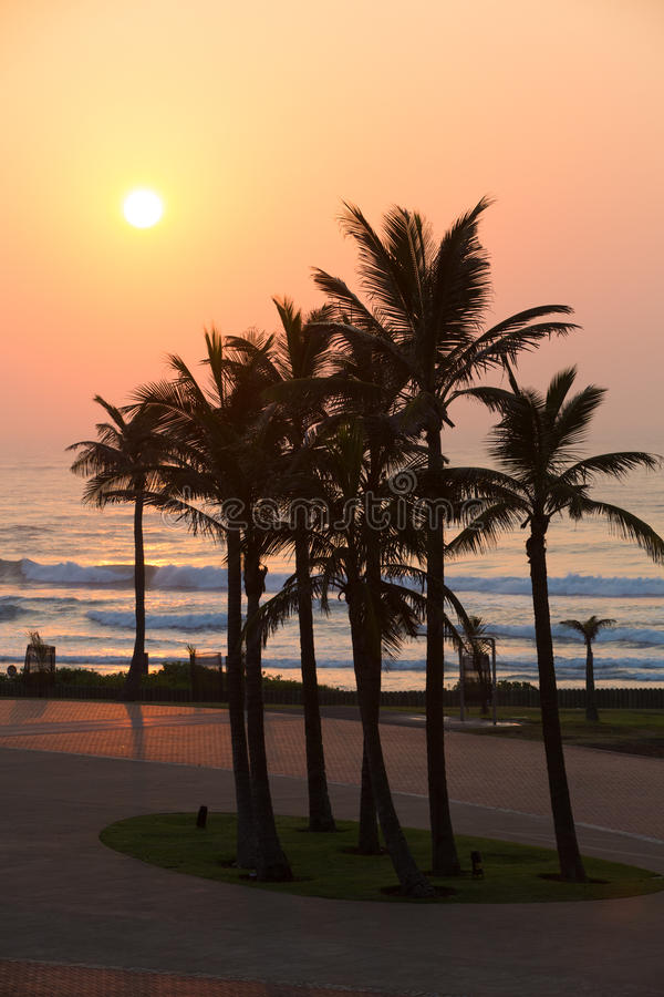 Durban palms. A group of palm trees on Durban beach front, South Africa royalty free stock photo