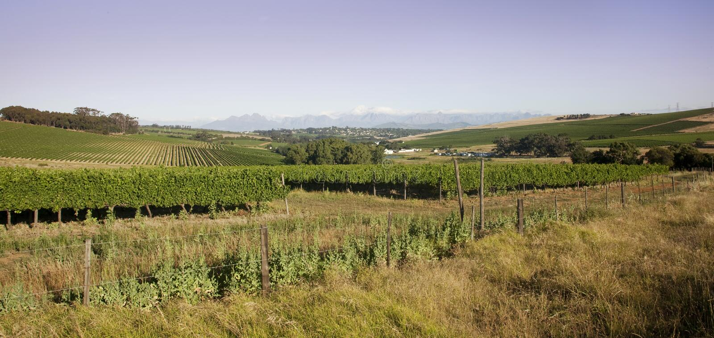 durbanville winelands 免版税库存图片