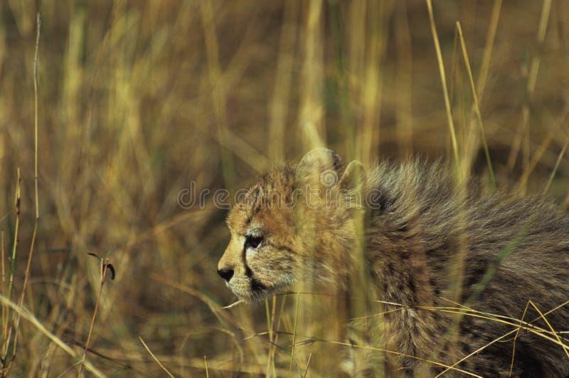 Download Durch das Gras stockfoto. Bild von gelb, gesicht, wildnis - 48610
