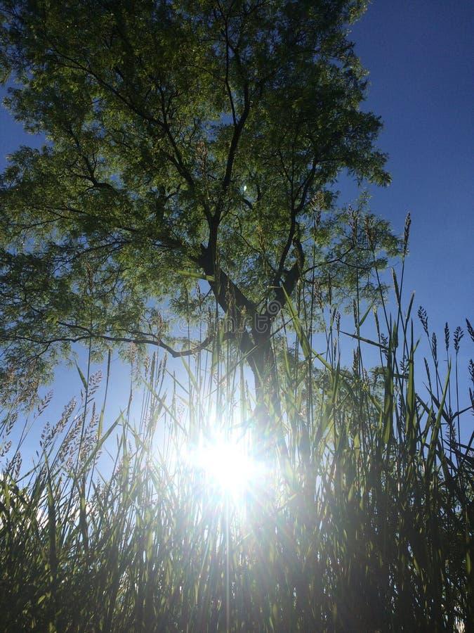 Durch das Gras lizenzfreies stockbild
