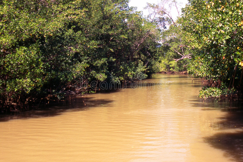 Durch den Amazonas-Regenwald lizenzfreies stockbild