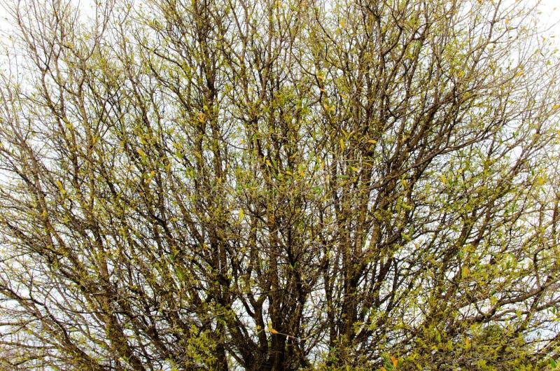 Durch den Baum stockfotografie