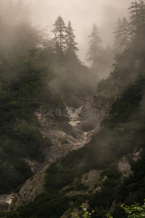Durch den Nebel lizenzfreie stockbilder