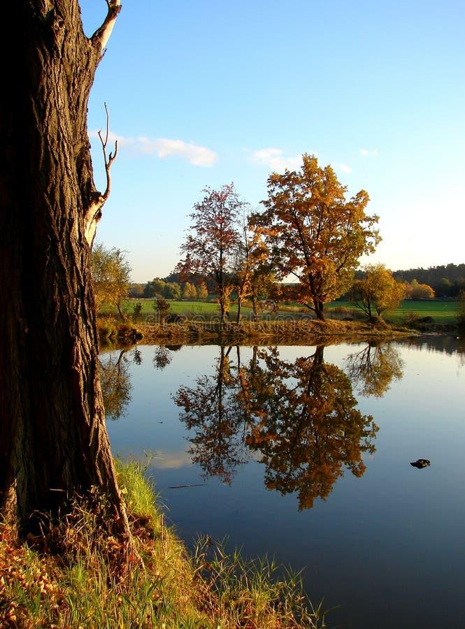 Durch den Teich stockbilder
