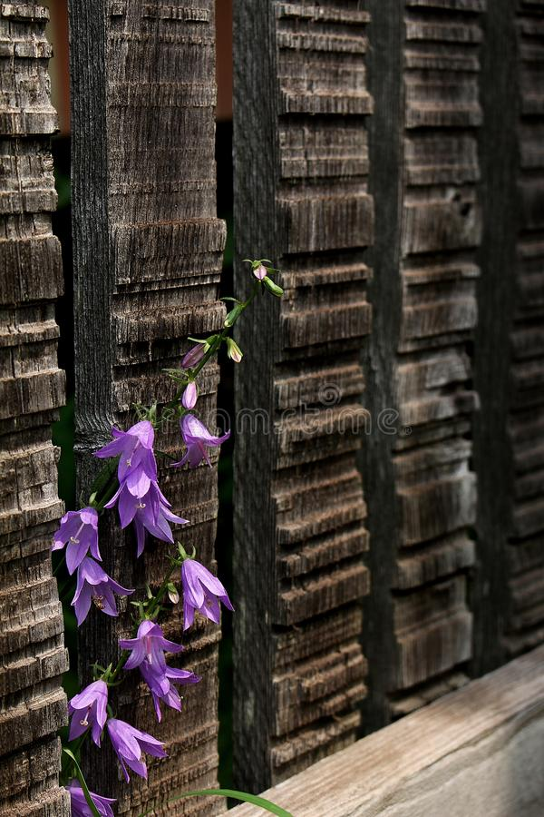 Durch den Zaun stockbilder