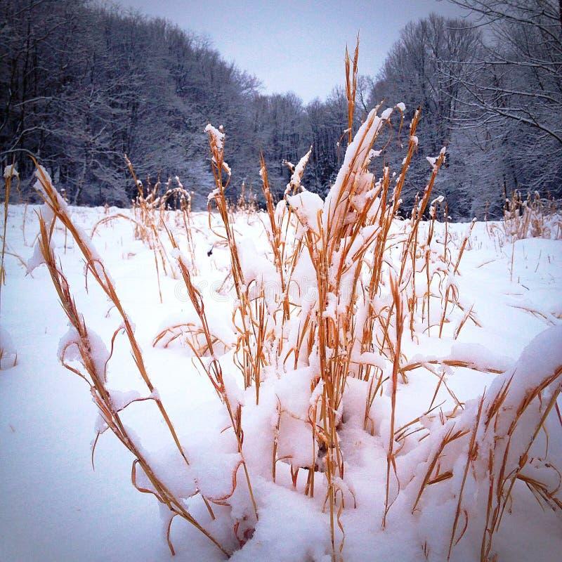 Durch die drygrass stockbild