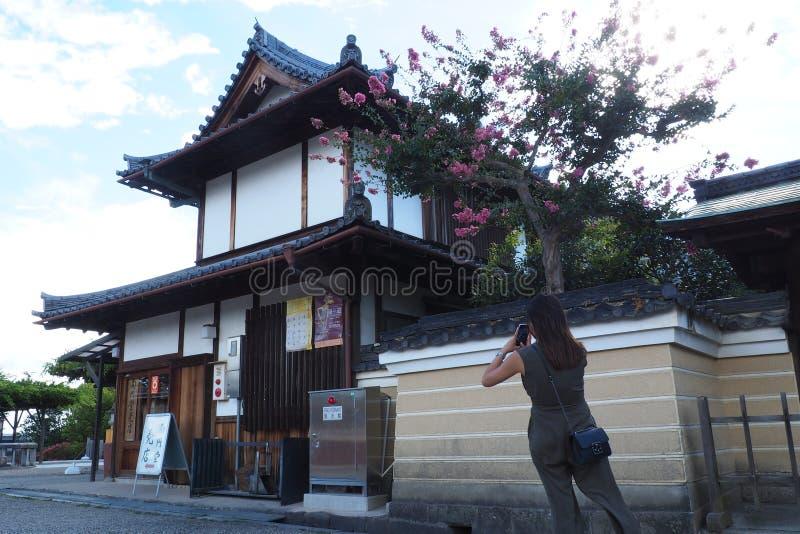 Durch Nara Deer Park schlendern, stoppend, um ein Foto der blühenden Magnolienblumen zu machen stockbilder