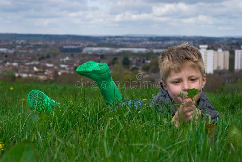 Durchdachter Junge, der ein Blatt betrachtet. stockfotografie