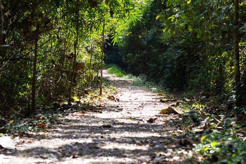 Durchgang im Wald stockbilder