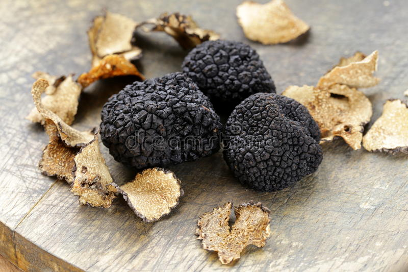 Dure zeldzame zwarte truffelpaddestoel royalty-vrije stock foto's
