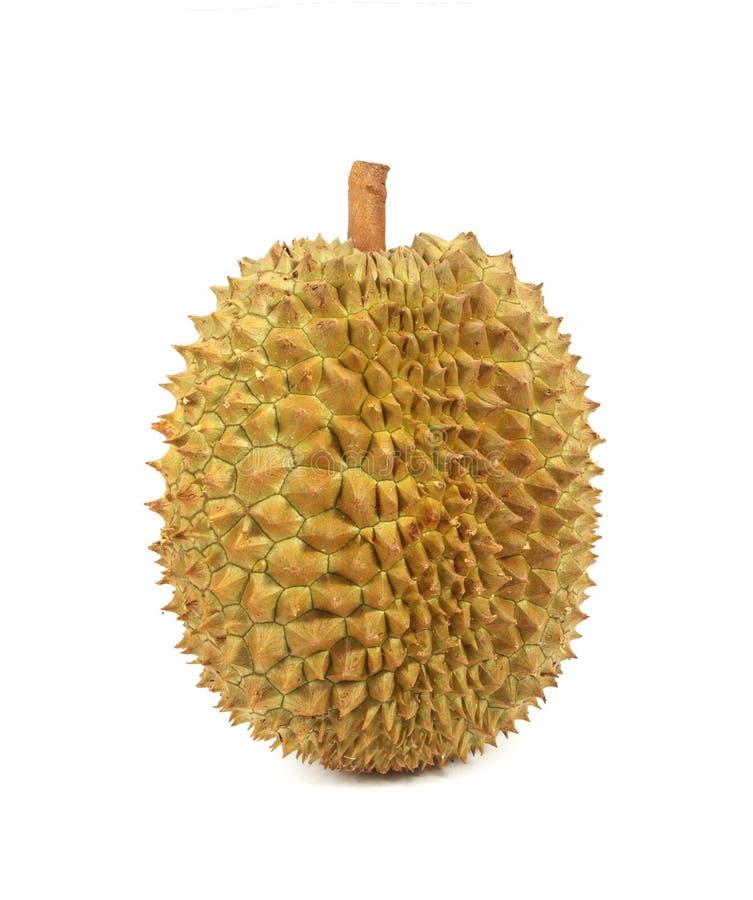 Durian изолированный на белой предпосылке стоковое изображение rf