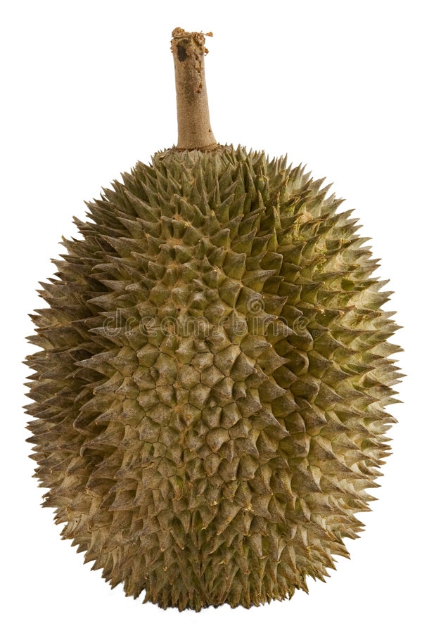 Download Durian stock photo. Image of thorny, pungent, white, pointed - 140992