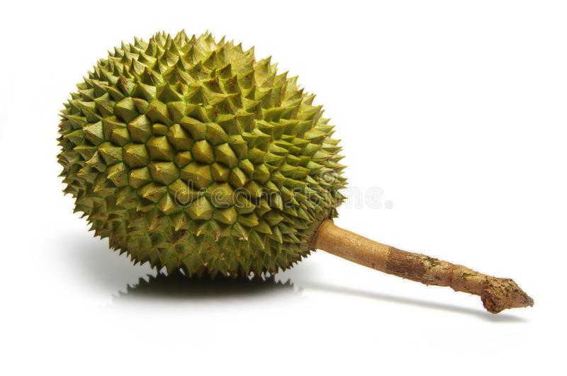 Download Durian stock photo. Image of smelly, sweet, exotic, delicacy - 14495920
