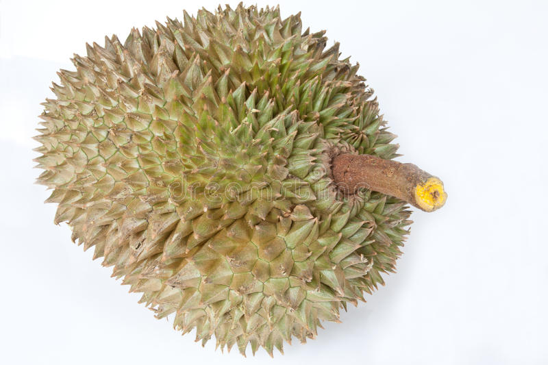 Download Durian stock image. Image of green, king, spikes, yellow - 19356205