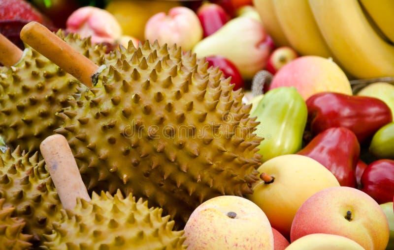 Durian. Is a scientific Durio zibethinus L royalty free stock photo