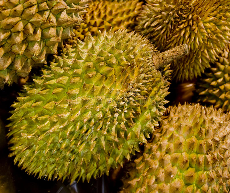 Download Durian stock image. Image of many, background, ripe, nutritious - 20900059