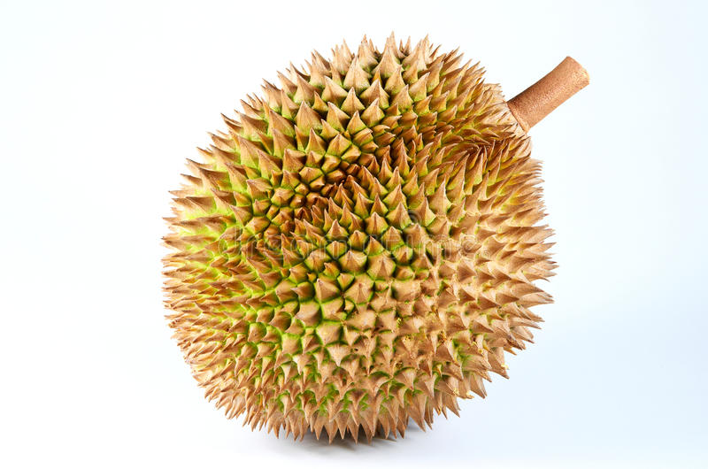 Download Durian stock photo. Image of taste, flesh, ordour, asia - 22621712