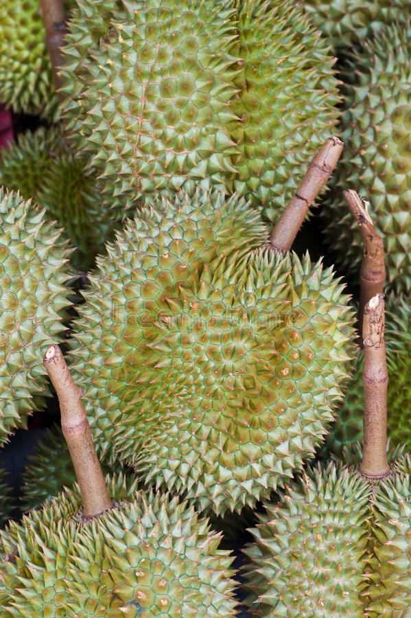 Download Durian stock photo. Image of round, odour, delicious - 23623490
