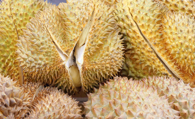 Download Durian stock photo. Image of durian, food, rind, background - 27521932