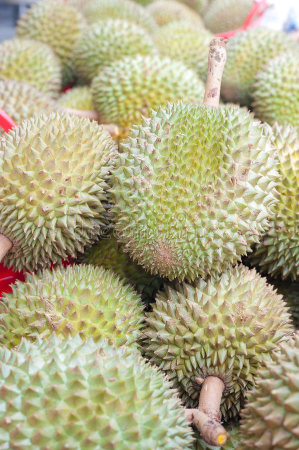 Download Durian Stock Image - Image: 28398071
