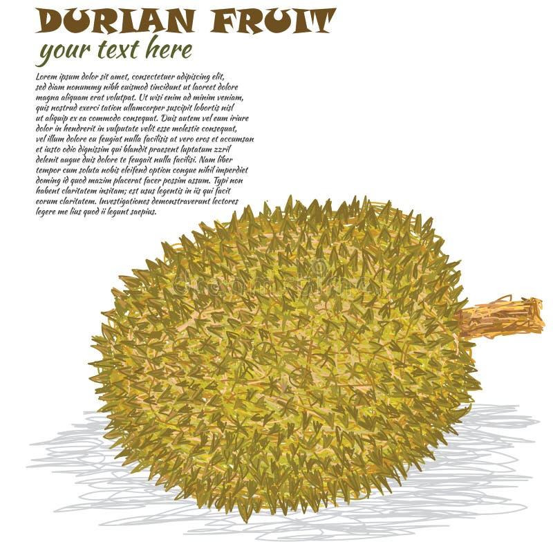 Durian ilustração do vetor