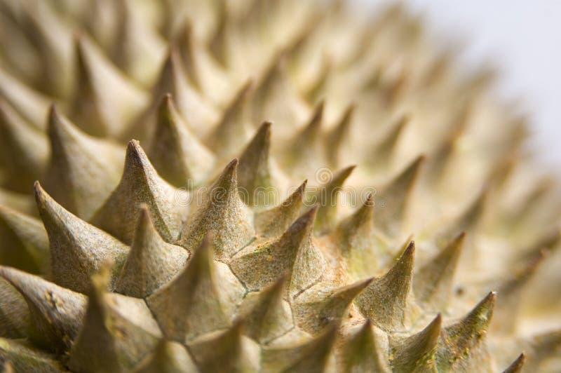 Durian 3 royalty-vrije stock foto