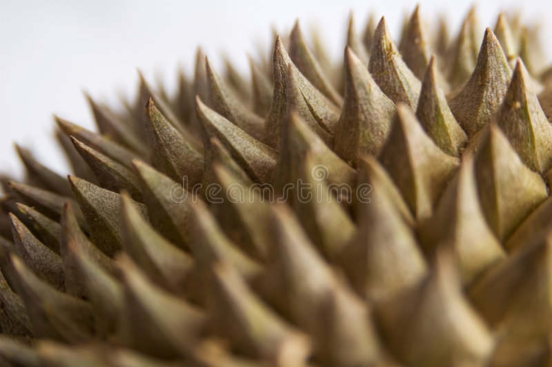 Durian 4 Stock Images