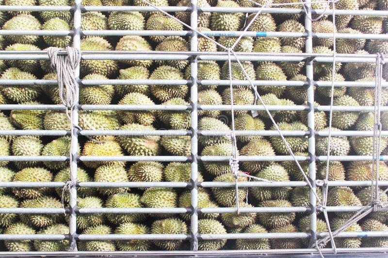 Durian in the car royalty free stock photos