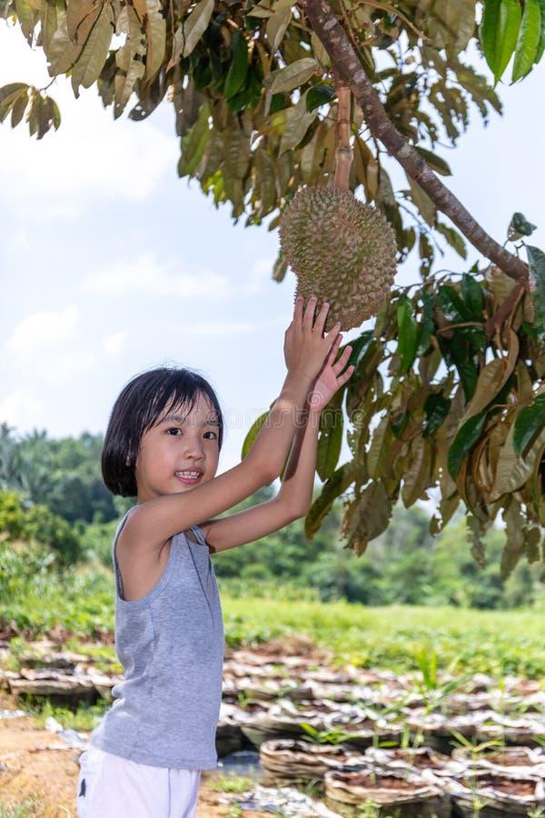 Durian cinese asiatico della tenuta della bambina sull'azienda agricola fotografia stock libera da diritti
