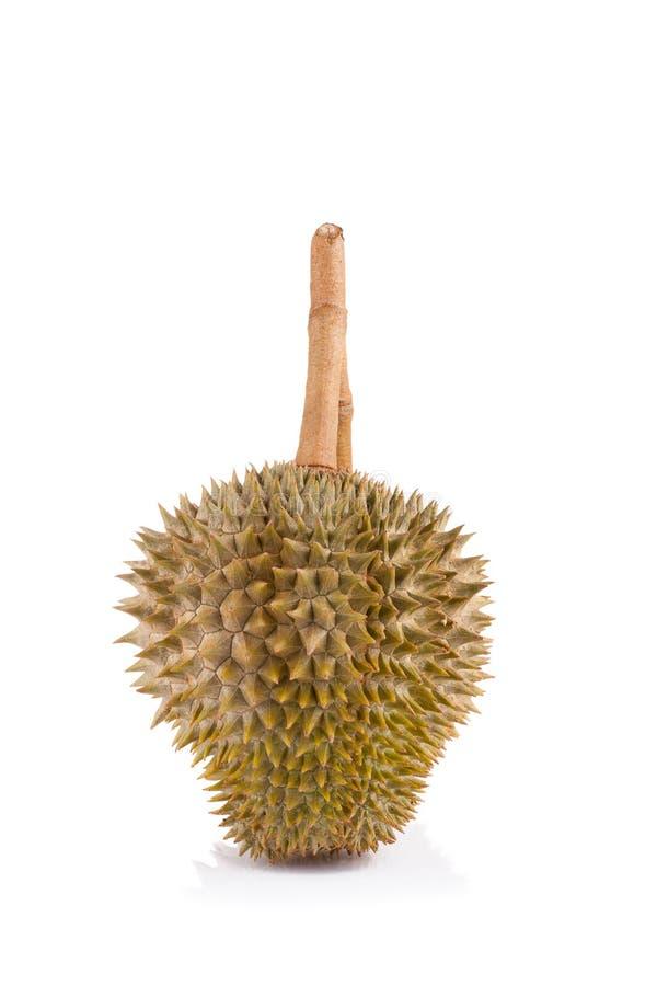 Durian d'isolement sur le fond blanc image libre de droits