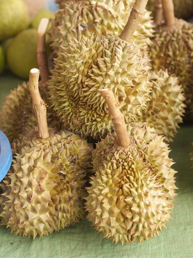 Durian dalla frutta della Tailandia pronta da mangiare dall'albero nell'oro giallo del giardino fotografie stock libere da diritti