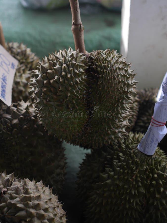 Durian dalla frutta della Tailandia pronta da mangiare dall'albero nell'oro giallo del giardino immagini stock