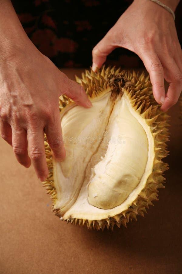 Durian della holding della mano fotografie stock