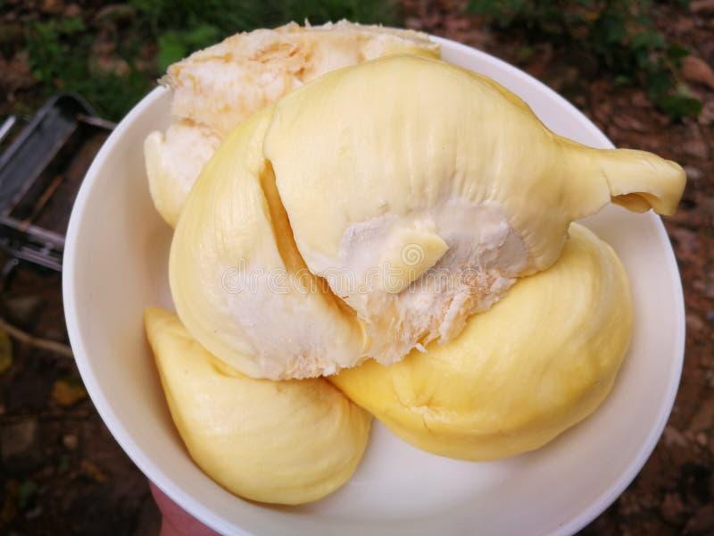 Durian di dolce e di delizioso immagine stock libera da diritti