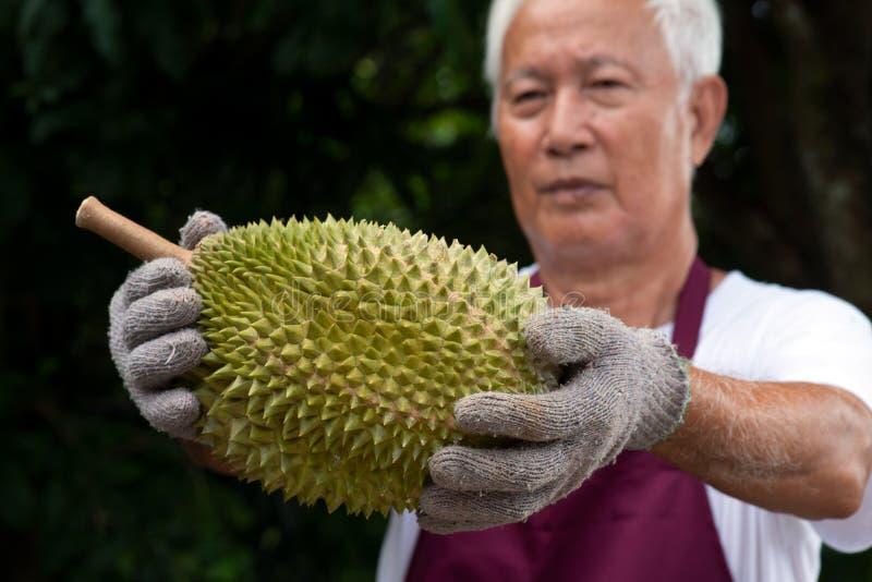 Durian do fazendeiro e do rei do musang fotos de stock royalty free