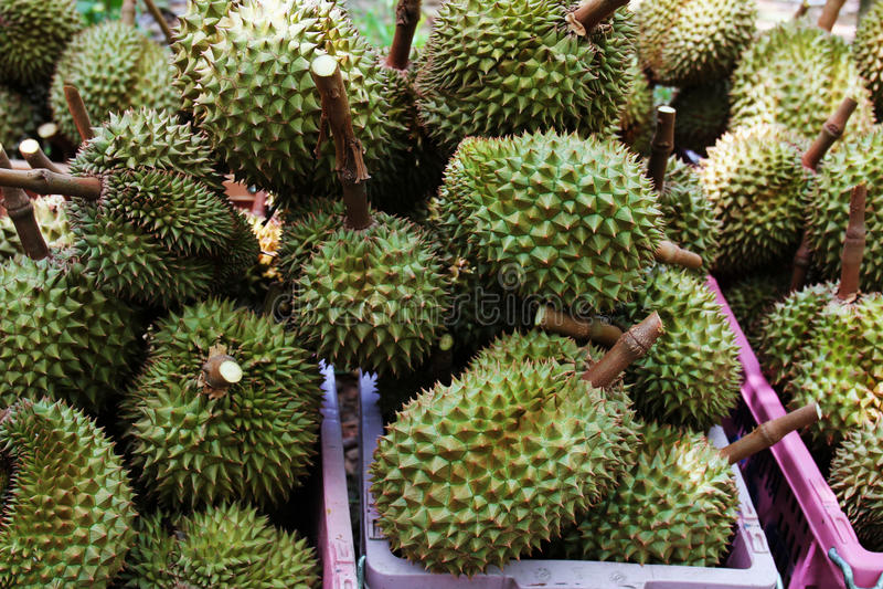 Durian dolce in Tailandia immagine stock libera da diritti