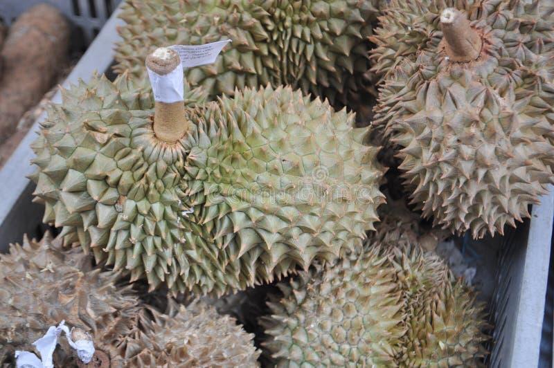 Durian edible fruit royalty free stock photos