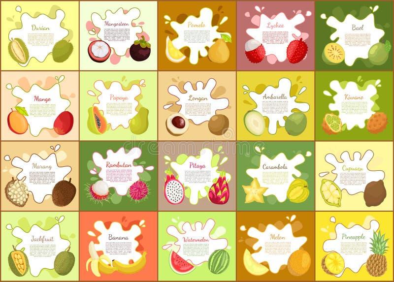 Durian, en de Vectorillustratie van de Mangostanpompelmoes vector illustratie