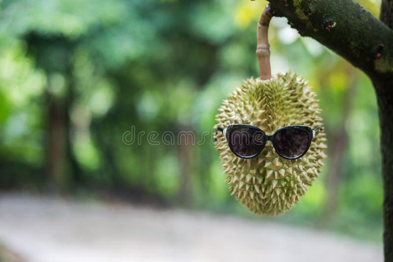 Durian en el árbol fotos de archivo