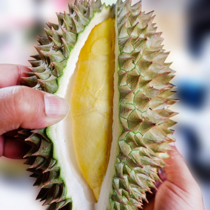 Durian en gros plan Monthong dans ma main images stock