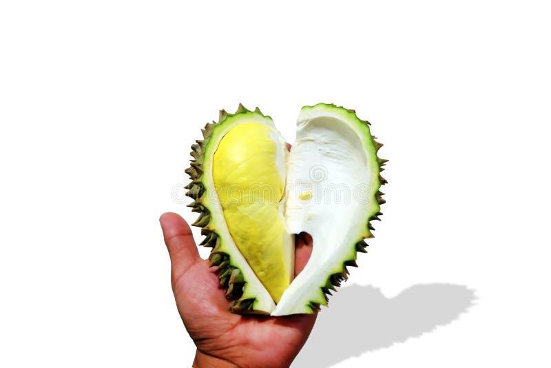Durian en gros plan Monthong dans ma main photo stock