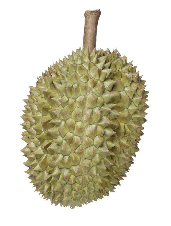 Durian en un fondo blanco foto de archivo