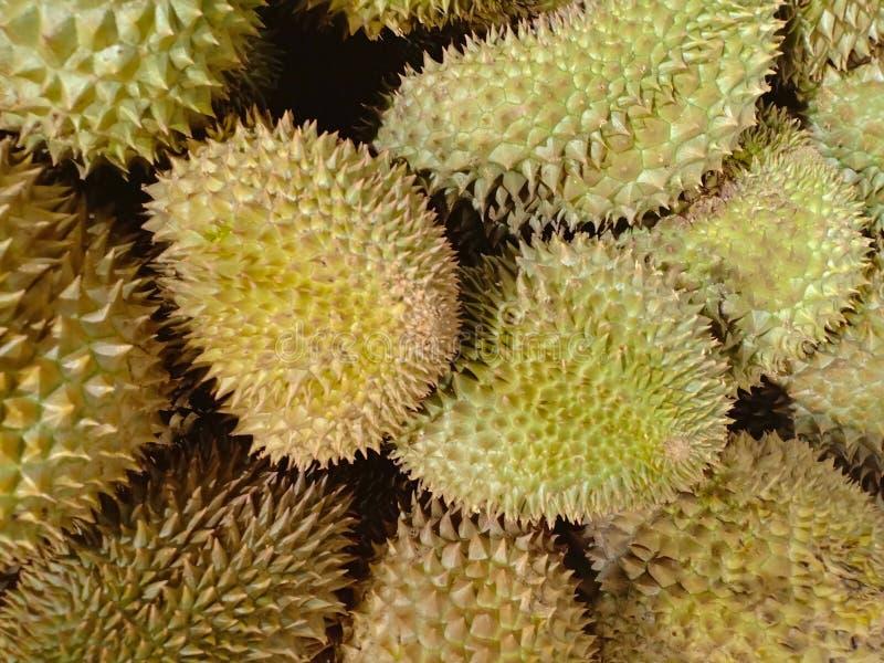 Durian fresco de la granja orgánica en Tailandia foto de archivo libre de regalías